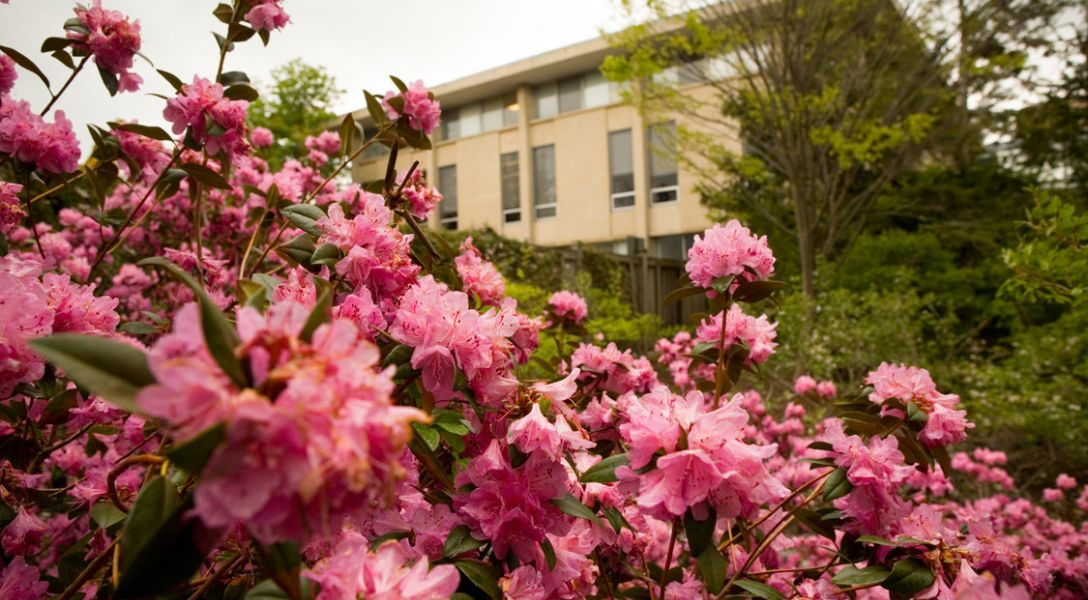 Flowers near Malott Hall