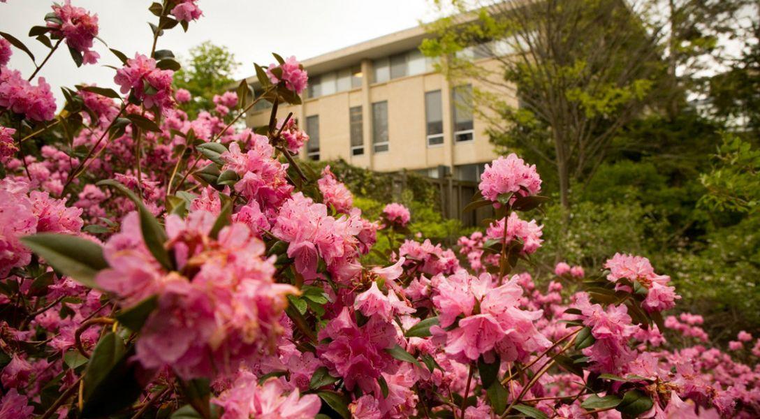 Flowers near Malott Hall