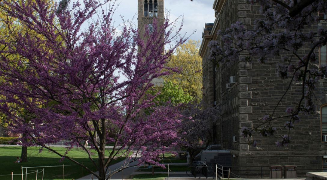 McGraw Tower in the spring