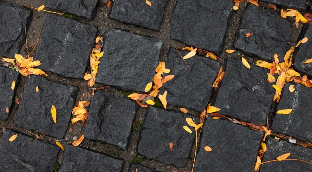 Close-up of pavement with leaves